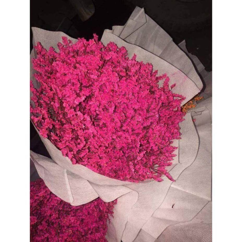 hoa sao khô