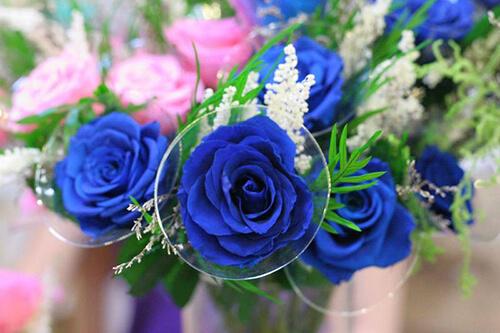 Hoa hồng xanh có vẻ đẹp huyền ảo và bí ẩn
