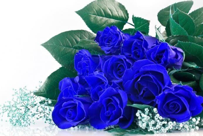 Hoa hồng xanh thích hợp tặng người yêu