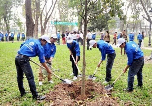 Tích cực trồng cây, gây rừng nhằm bảo vệ môi trường