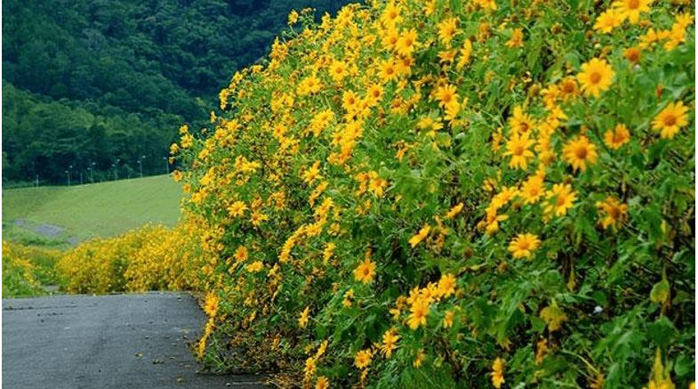 Hoa dã quỳ và sự mạnh mẽ của riêng nó