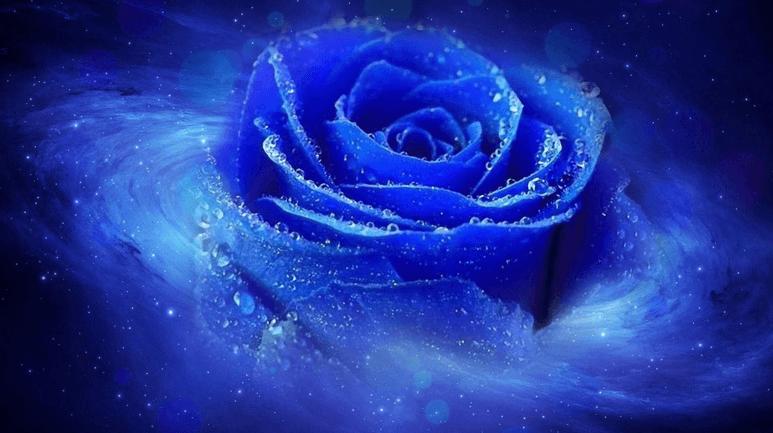 Hoa hồng xanh khoác lên mình nét đẹp mạnh mẽ
