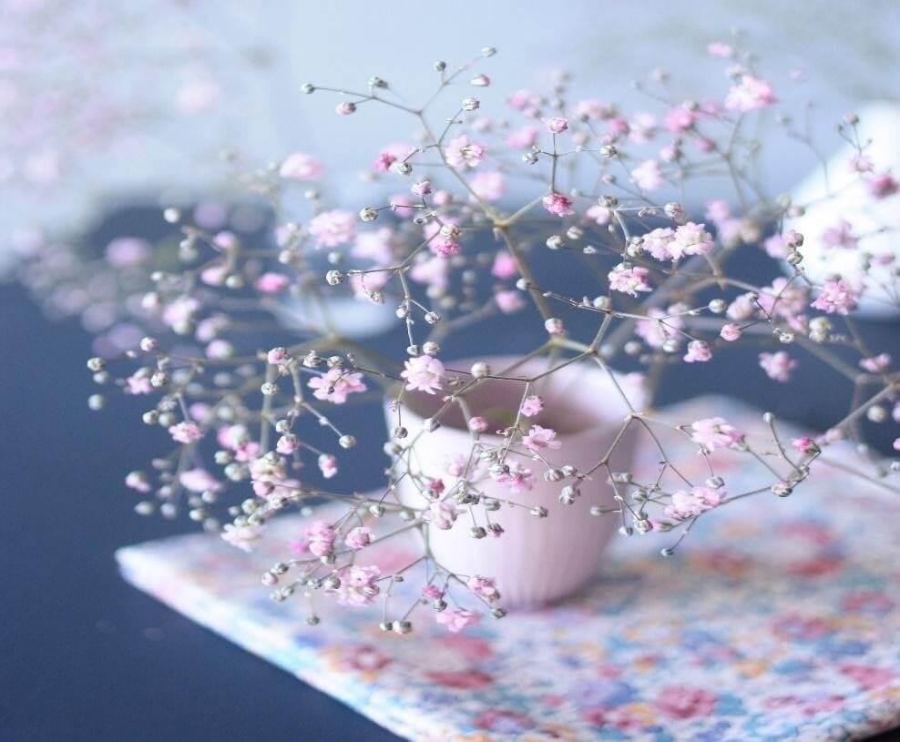 Ý nghĩa hoa baby và cách làm hoa baby khô