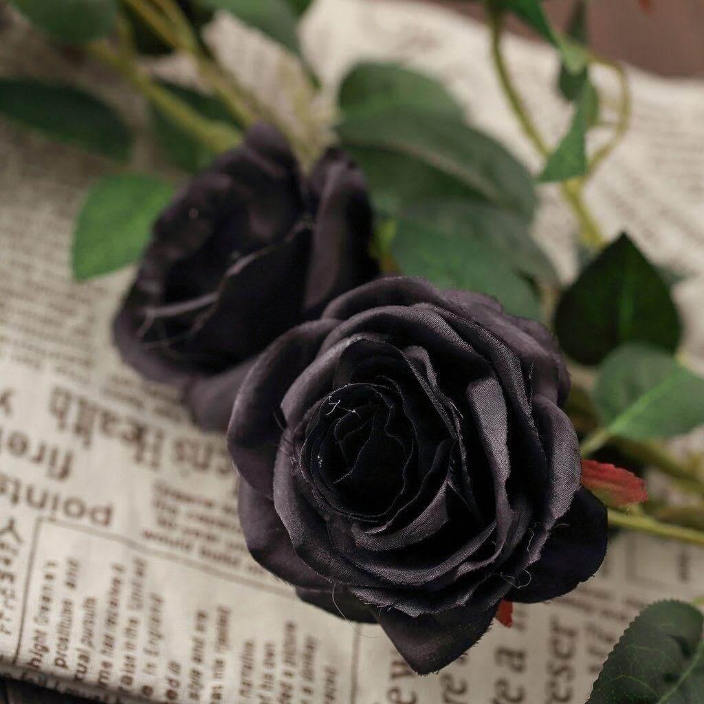 Ý nghĩa hoa hồng đen và câu truyện truyền thuyết đằng sau nó