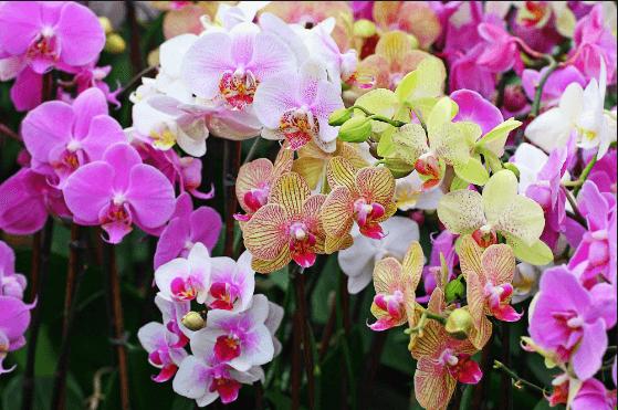 Bật mí thông tin về tên các loại hoa lan ở Việt Nam