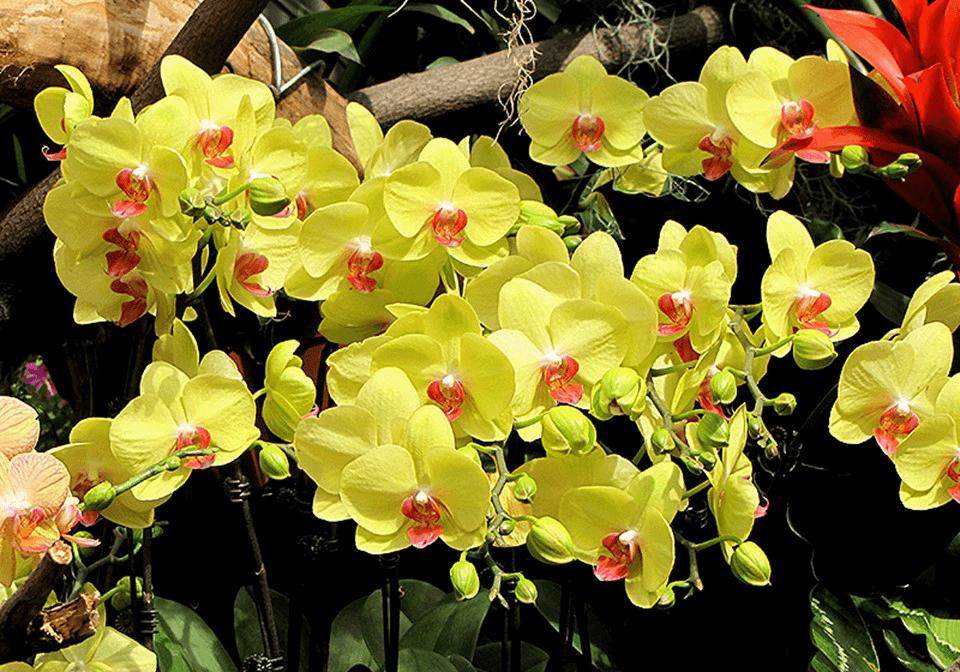 Tiết lộ các loại hoa màu vàng đẹp xiêu lòng mà bạn không nên bỏ lỡ